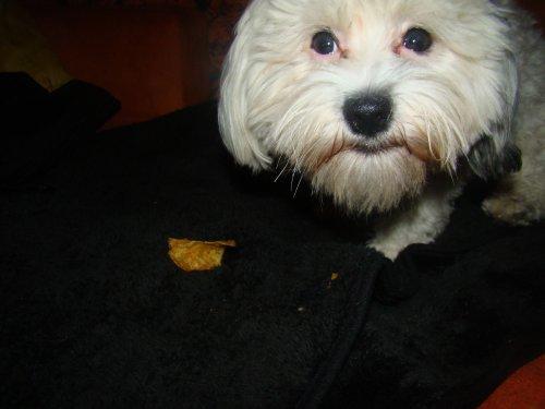Hunde Chips